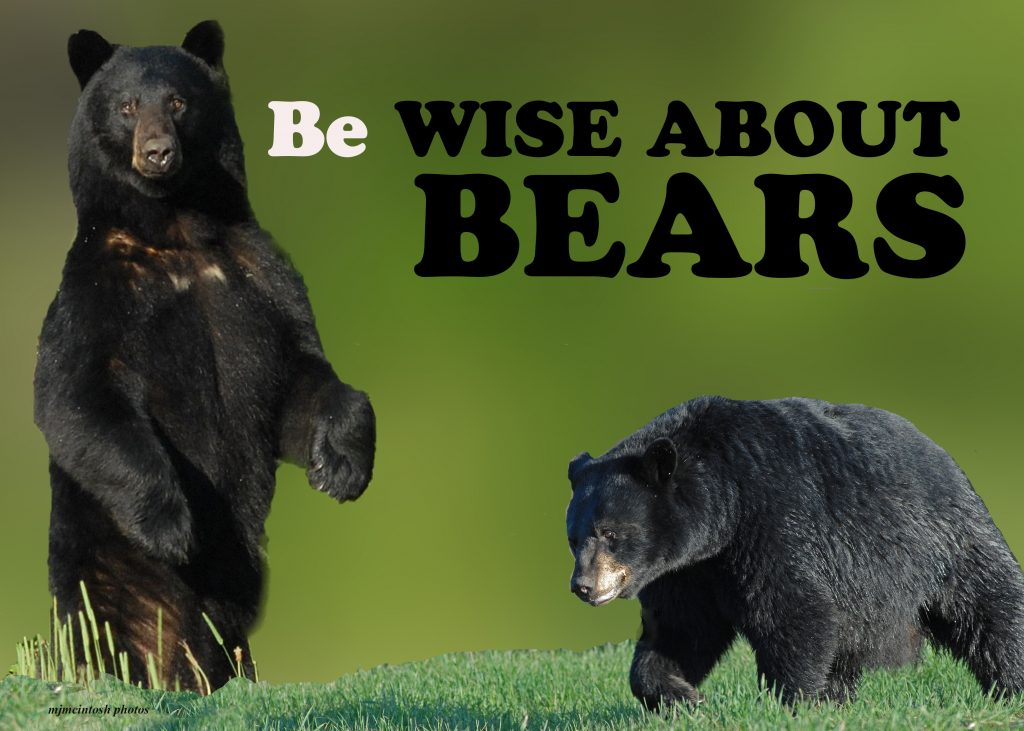 Be wise about bears. Black bears.